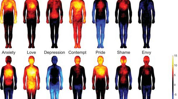 Hvor sidder følelserne?
